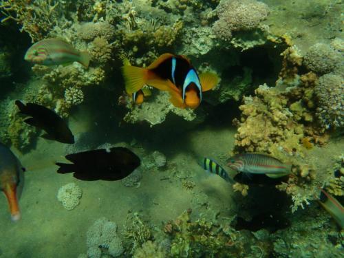 الكانيون البحري بمحمية صور نبق أو الغرقانة